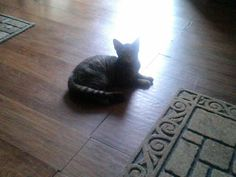 Sun on young cat