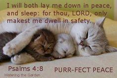 good night kitties
