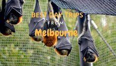 Some of the best Day Trips Melbourne by Car Blog Post