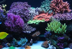 Tank of the Month - July 2008 - Reefkeeping.com