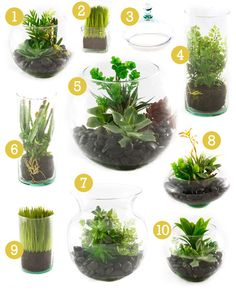 Artificial Terrarium - gift for mom