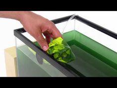 Grow Spirulina at Home: Kickstarter Video