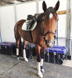 Ogilvy Equestrian approved! Ogilvy Equestrian, halfpad, saddle pad, horse show, horse, show jumping, riding, fashion, tack www.ogilvyequestrian.com
