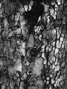 Tree Bark - natural cracked texture inspiration, organic patterns in nature Natural Forms, Natural Texture, Natural Wonders, Nature Artwork, Nature Prints, Patterns In Nature, Textures Patterns, Organic Patterns, Organic Structure