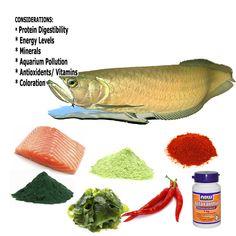 10 Best Fish Food Brands For Aquarium Ideas Fish Aquatic Animals Food