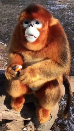 Cute Wild Animals, Cute Funny Animals, Animals Beautiful, Animals And Pets, Cute Dogs, Funny Animal Videos, Funny Animal Pictures, Pet Monkey, Mundo Animal