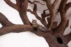 New York-based artist Robert Rogalski has created a cat tree sculpture that looks like the Ents from J. Happy Paw, Grandeur Nature, Culture Art, Fake Trees, Cat Enclosure, Owning A Cat, Cat Furniture, Michael Fisher, Cat Tree House