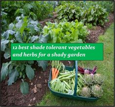 12 shade loving vegetables and herbs that you can easily grow in your shady garden