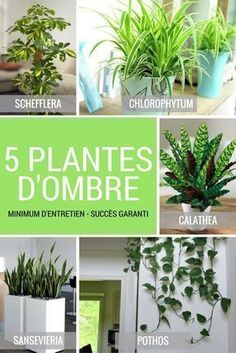 10 plantes z ro lumi re qui survivent dans un sous sol sombre et les pi ces mal clair es. Black Bedroom Furniture Sets. Home Design Ideas