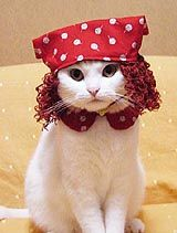 Cat in Anne of Green Gables costume.