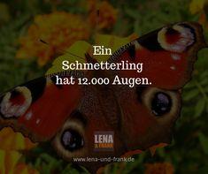 #Schmetterling #Auge
