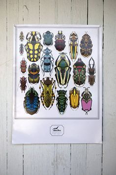 beetle poster by stacks