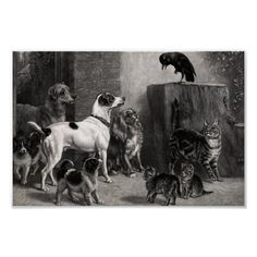 Vintage Dogs And Cats Meeting In The Alley Irish Terrier, Vintage Dog, Work Inspiration, Custom Posters, Cat Art, Free Stock Photos, Art Photography, Dog Cat, Illustration Art