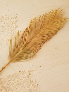 Palm - Dried Sago Palm Leaves - length 17 to 25 inches / 4 to 6 inches wide Cream Aesthetic, Brown Aesthetic, Aesthetic Backgrounds, Aesthetic Wallpapers, Les Accents, Sago Palm, Dry Plants, Palmiers, Dry Leaf
