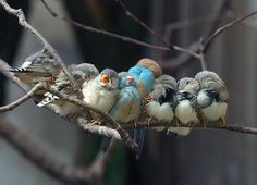 These little birds are so cute - snuggling to keep warm?