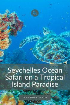 Seychelles Ocean Safari on a tropical island paradise Seychelles Holidays, Giant Tortoise, Tortoises, Luxury Holidays, Bird Species, Marine Life, Bespoke, Safari, Gem