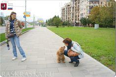 English Cocker Spaniel from Moscow. English Cocker Spaniel, Dog Photos, Moscow, Photo And Video, Dogs, American Cocker Spaniel, Doggies, Pet Dogs