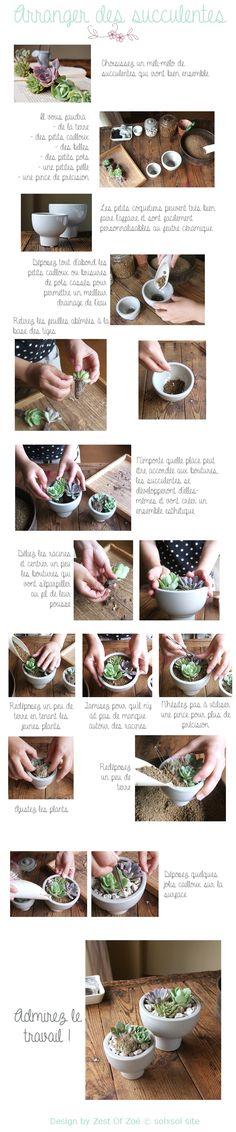 Succulentes! {Green}
