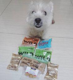Yay!!! Today I'm so happy because firstly my mom's home!!! And she showed me the gifts @ocha_boy mama gave! Thank you @ocha_boy Mama!!! Smells really good! I almost eat it straight away with the plastic  . #eijiwestie #westhighlandwhiteterrier #toocute #ilovemydog #lovemydog #westy #indonesia #dog #pet #doglove #woof #doggie #bestoftheday #cute #adorable #dogworld #paw #instapet #dogstagram #petstagram #westie #photooftheday #dogsofinstagram #paws #feature_do2 #westiegram #mylilbuddy…
