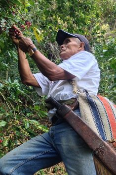 Confronting the Crisis in Coffee Peace Coffee, Climate Adaptation, Harvest Market, Coffee Prices, Fair Trade Chocolate, Carbon Sequestration, Cost Of Production, Agricultural Practices, Coffee Farm