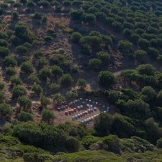 Greek Forest and Beehives