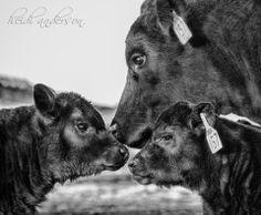 Legacy Livestock Imaging