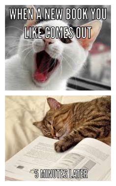 New Books, Memes, Cats, Animals, Gatos, Animales, Animaux, Kitty, Cat