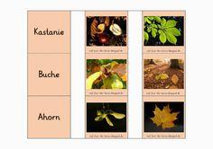 http://reif-fuer-die-ferien.blogspot.de/2014/02/baum-memory.html: Blog Lehrer, Lehrerblog, Material, Materialien
