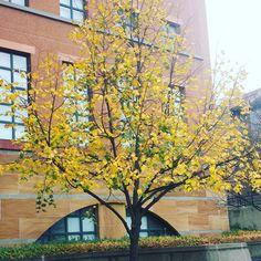 shrura: I love #fall #fallcolors #cincinnati #uofcincy #universityofcincinnati