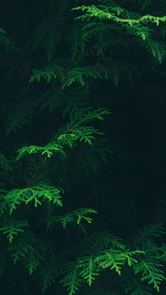 Free Stock Images Ecosystem - Forest - Green - Jungle - Leaf - Nature - Old Growth Forest - Organism - Tropical And Subtropical Coniferous Forests - Vegetation - Tree Wallpaper Iphone, Green Wallpaper, Flower Wallpaper, Nature Wallpaper, Pattern Wallpaper, Leaves Wallpaper, Trendy Wallpaper, Mobile Wallpaper, Iphone Wallpapers