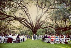 wedding under the wedding tree in Eden Gardens...look at the picture gallery on this sight...love it!