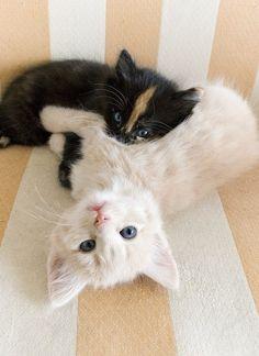 Cuddle kitties...