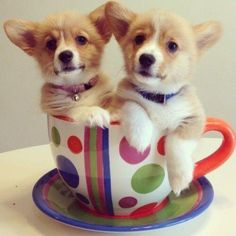 Corgis in a Teacup! I got a great wine glass gift today, but this would work too!