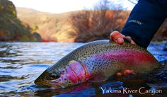 Yakima River Fly Fishing Guide Service, Fly Shop, and Lodge - Washingtons Best Fly Fishing Lodge