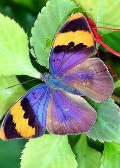 Types Of Butterflies, Flying Flowers, Beautiful Butterflies, Butterfly Games, Butterfly Photos, Butterfly Colors, Bird Quotes, Flower Quotes, The Colour Of Magic