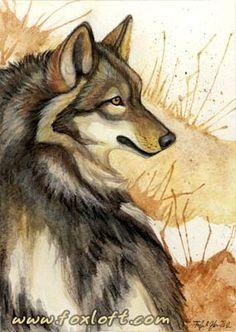 Ma'iingan by Foxfeather248 on deviantART #Art #AnimalArt