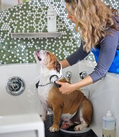 Discover the success secrets of one woman's doggie day spa