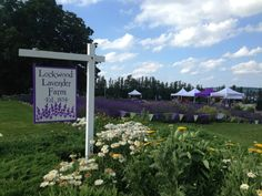 Check out Lockwood Lavender Farm for a refreshing experience filled with the scent of lavender. This spot is a must-visit in New York. Farms In Nj, Geneva New York, York Things To Do, Little Compton, Time To Leave, New York Travel, Day Trips, Places To Go, Lavender