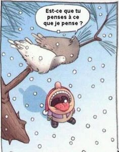 "Je lai toujours dit! Le pigeon est fourbe! - ""is it thinking what I'm thinking?"" more funny things: http://hotfunnystuff.com"