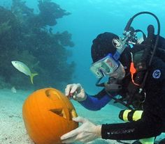 Still waiting for my invite to an underwater pumpkin carving party. Are you attending one this year? https://www.facebook.com/likeprimescuba