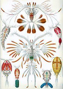 Ernst Haeckel - Kunstformen der Natur (1904) plate 56: Copepoda - Calanus pavo; Calocalanus pavo 1852 male Clytemnestra scutellata; 1849  female Oncaea venusta; Philippi 1843 male Cryptopontius thorelli; Cryptopontius thorelli Giesbrecht 1899 female Acontiophorus scutatus; Acontiophorus scutatus 1873 female Corycaeus venustus; Corycaeus venustus Dana 1849 female Sapphirina Darwinii; Sapphirina darwini Haeckel 1864 female Augaptilus filigerus; Euaugaptilus filigerus 1863.