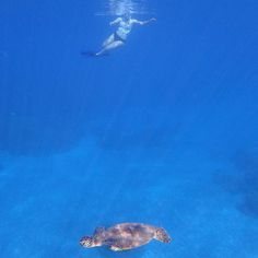 It is a Turtle kind of Tuesday in Maui. #hpsml #hpsmaui