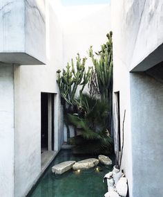 home is where they cacti is