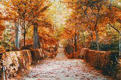 Autumn, Otoño, Herbst.