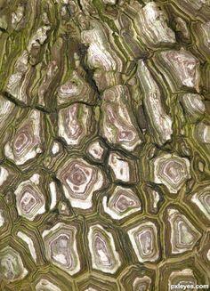 Bark Pattern by EmiK