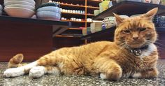 This Cat Has Spent 9 Years Running a Store Without Taking a Day Off | Bored Panda