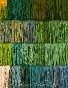 Studio photography of various colors of yarn dyed at the Weaver's shop.  Shot for book by Max Hamerick on dyeing textiles; Greens; Top three rows are Fustic with Indigo; The Bottom row is Annatto Seed with Indigo. Photo by Barbara Temple Lombardi - For those who've seen this whole set, that means that green was not made with a separate dye, but by blending yellow (Fustic and Annatto Seed) with blue (Indigo).