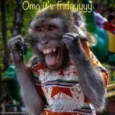 omg its friday quotes cute animals friday days of the week monkey