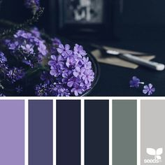 today's inspiration image for { color setting } is by @beverlylcazzell_lavenderbleu ... thank you, Beverly, for sharing your wonderful photo in #SeedsColor !