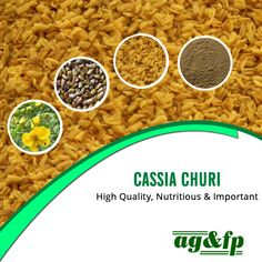 #CassiaChuri is majorly and importantly known for varied reasons. -	It is contamination free. -	High in nutritional values. -	Great for pet food. -	Can also be used as #ThickeningAgents. #AmbaGums